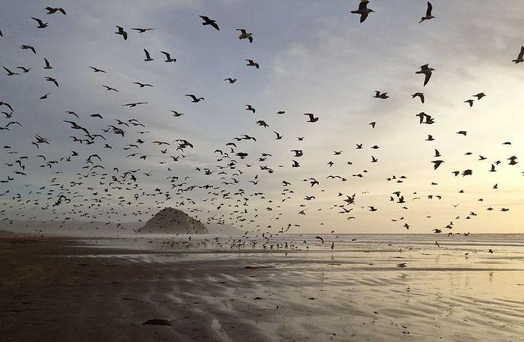 File:Gulls on Morro Strand State Beach.jpg