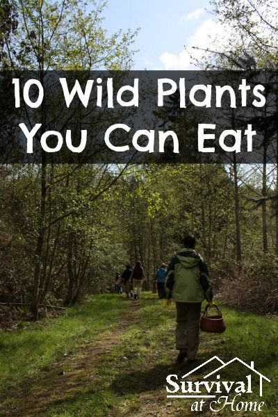 10 Wild Plants You Can Eat (Direct Link)