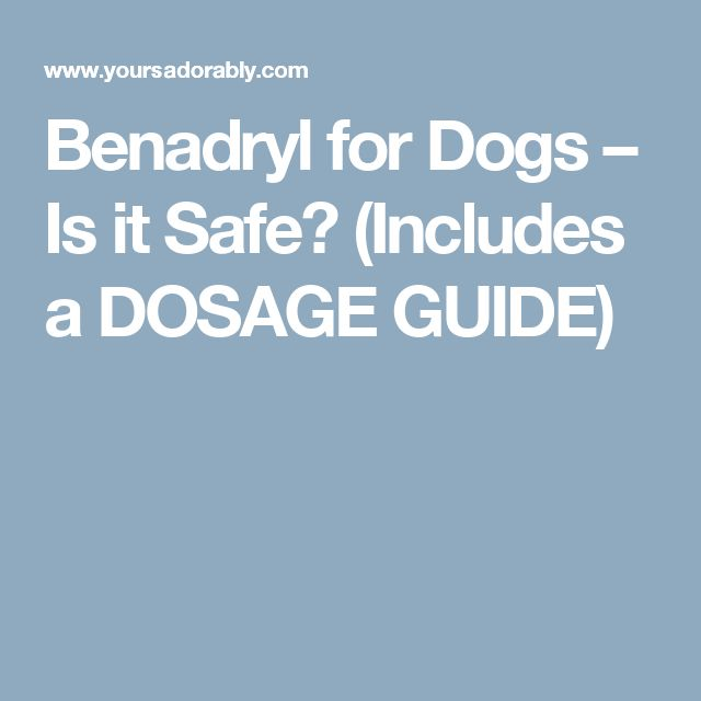 Benadryl for Dogs – Is it Safe? (Includes a DOSAGE GUIDE)