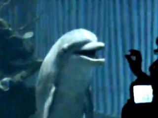 Free the Disney Dolphins: Sign This Petition. http://www.change.org/petitions/free-the-disney-dolphins#  @seashepherdSeashepherd, Cetaceans Dolphins, Free Tilikum, Animal Kingdom, Animal Advocacy, Animal Cruelty, Disney Dolphins, Animal Welfare, Small