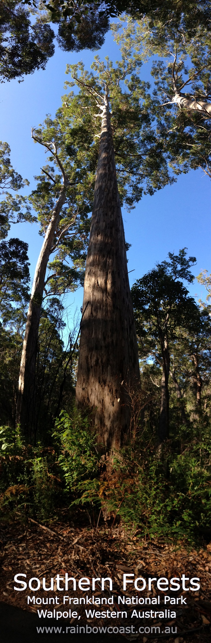 Mount Frankland National Park has karri, marri and tingle trees common only to the far south coast of Western Australia.
