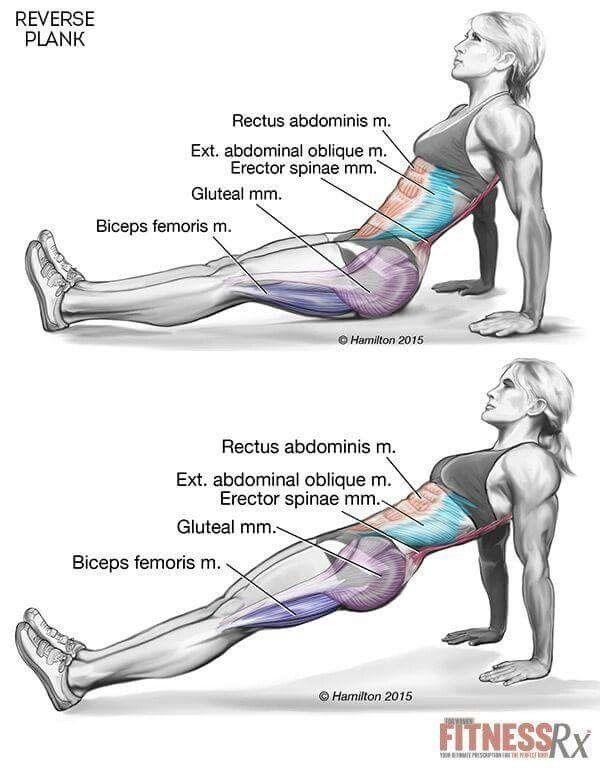 reverse planks