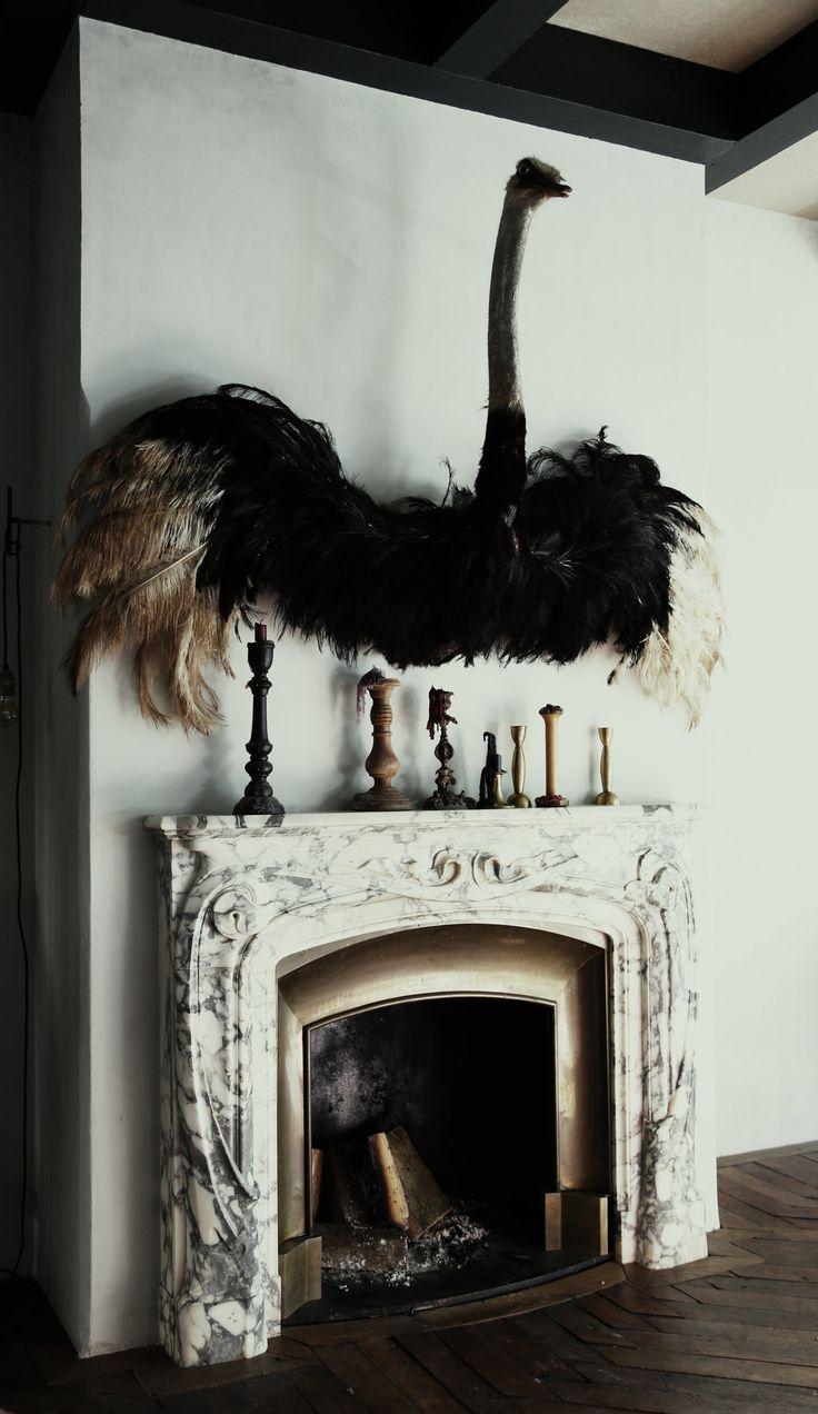 Ostrich | by Anne Dokter