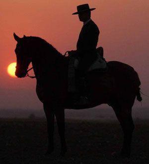 SPAIN / ANDALUSIA / Horses -  Andalusian Caballos Cruzados Línea Guardiola en Venta