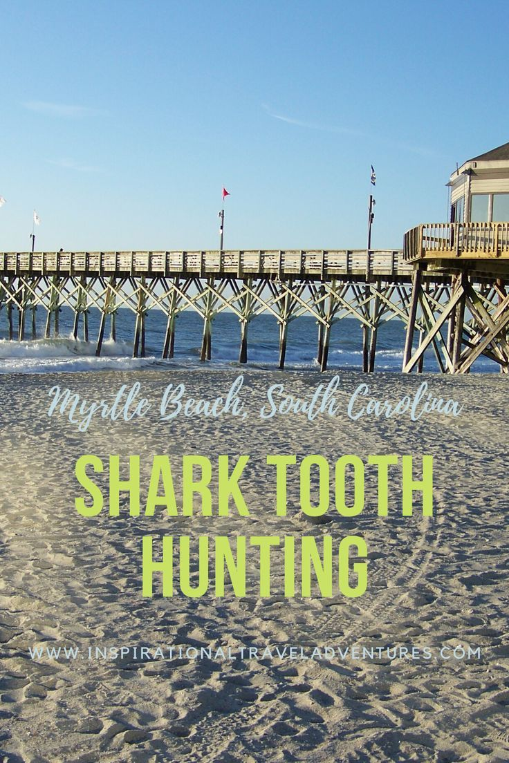 Shark Teeth Adventure Myrtle Beach Sc Inspirational Travel Adventures In 2020 South Carolina Beaches Travel Best Places To Travel