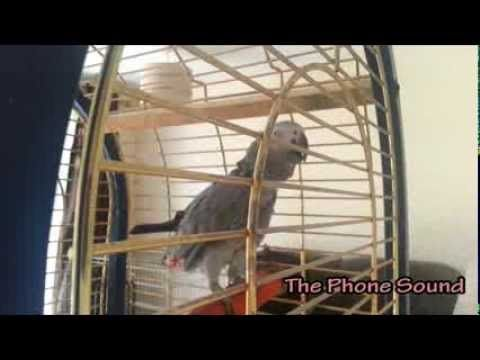 Polly the Parrot speaking (Part 1)