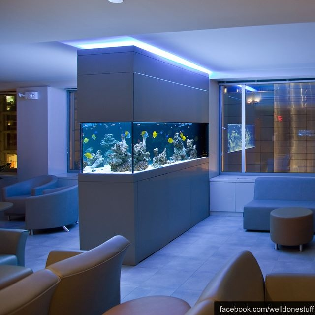 I Have Always Wanted A Massive Fish Tank In A Wall Building My