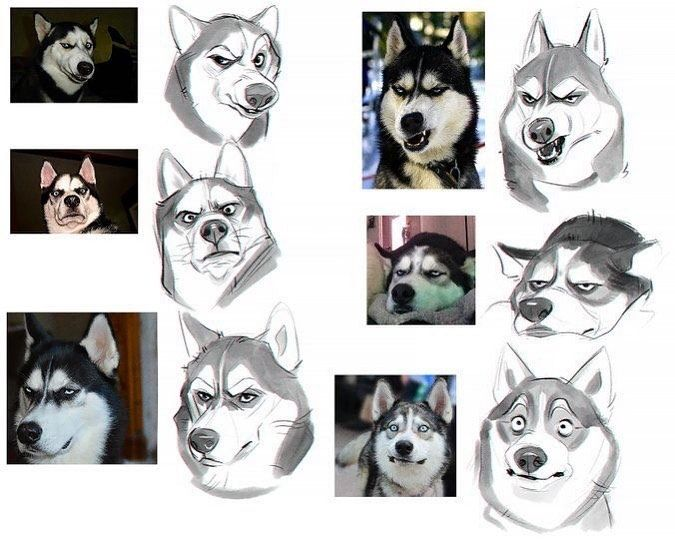 What Is Your Experience With Drawing Animal Expressions I Find It