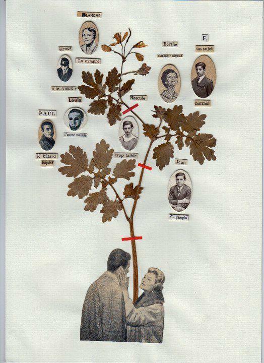maissa toulet arbre généalogique sujet normal