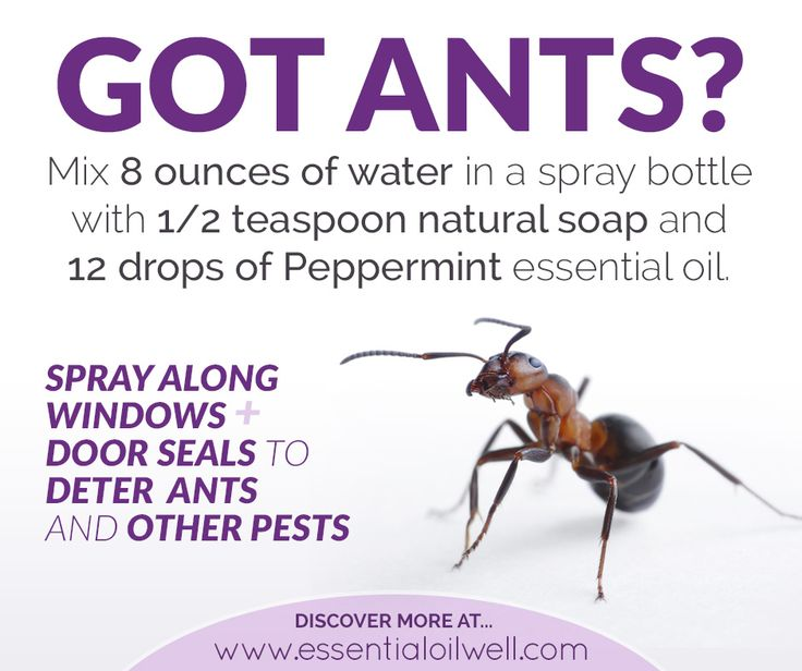 Got an Ant problem? Tired of toxic, smelly and sometimes dangerous chemicals used in traditional pest control? Here's a quick, easy, natural pest control solution for deterring ants and other unwanted pests using sweet smelling peppermint essential oil. Mix the following in spray bottle: 8 ounces of water 1/2 teaspoon natural soup 12 drops Peppermint [...]