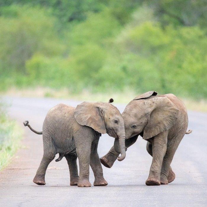 Друг слона картинка