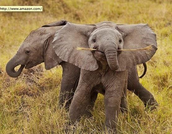 elephants: Happy Baby, Happy Elephants, Baby Elephants, Sticks, Plays, Smile Elephants, African Elephants, Photo, Animal