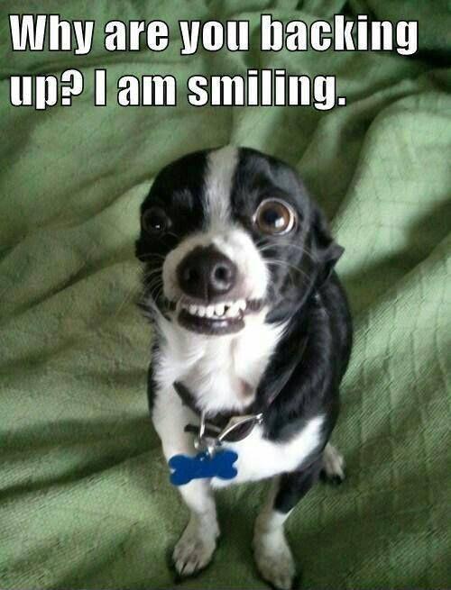 Dog smiling meme - photo#31