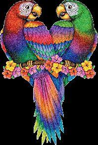 Gifs , Mensagens e Imagens :: Gifs de Pássaros e Aves