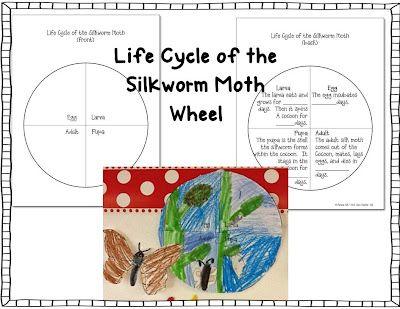 Silkworm Moth Life Cycle Wheel Pinterest FREEBIE Exclusive - Click on this link to download:  https://docs.google.com/file/d/0B2WRHjnafPchYVpadG1hcGF5Q3c/edit