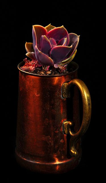A Mug Of Succulents