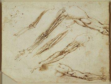 Contour Line Drawing Leonardo Da Vinci : Best drawing leonardo da vinci images anatomy