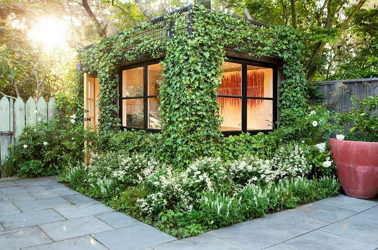 People have been using plants to boost the beauty of their home for a long time. Climbers are particularly appreciated. Their ability to grow quickly allow