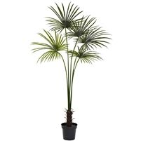 7-FT.  Fan Palm Tree UV Resistant (Indoor/Outdoor) #5447 Easily one of the boldest pieces of décor you can buy, this beautiful, striking fan palm tree stands seven feet in height, and has 150 palm leaves that fan out in every direction.