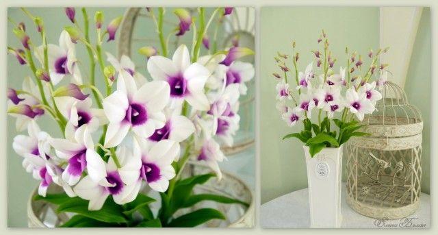 Эти нежные орхидеи получились по-настоящему весенними. Заказ был простой - сделать орхидеина подарок. Я была пущена в свободное творчество имне захотелось сделать небольшой, но пышный букет из белых орхидей. Заказчики мою идею одобрили. Работала я над композицией быстро и весело, иногда…