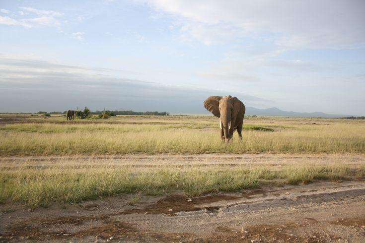 elephant in kenian park