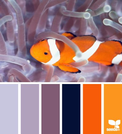 Curiously bold palette for a high Innovation value. #VoiceValues | color swim via Design-Seeds | commentary via The Voice Bureau at AbbyKerr.com