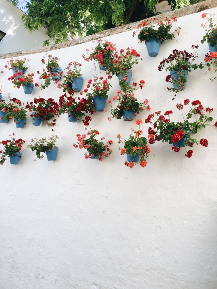 potted plants line the walkways of old town marbella | see our guide to the costa del sol on coco kelley