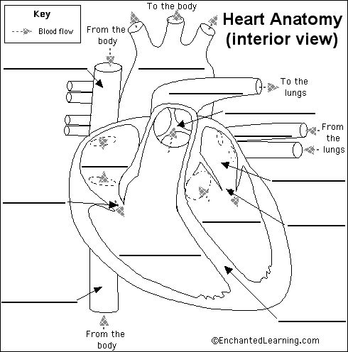 enchanted learning   free heart anatomy diagram human process flow diagram process flow diagram process flow diagram process flow diagram