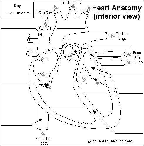 The Heart Quiz - PurposeGames