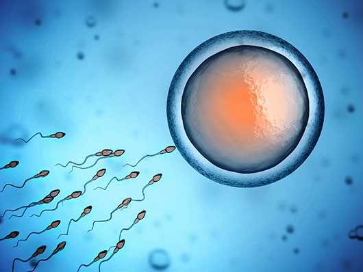 1. týden těhotenství: Podívejme se na nejkrásnější období v životě ženy týden po týdnu. #těhotenství #těhotná #vtom #děti #spermie