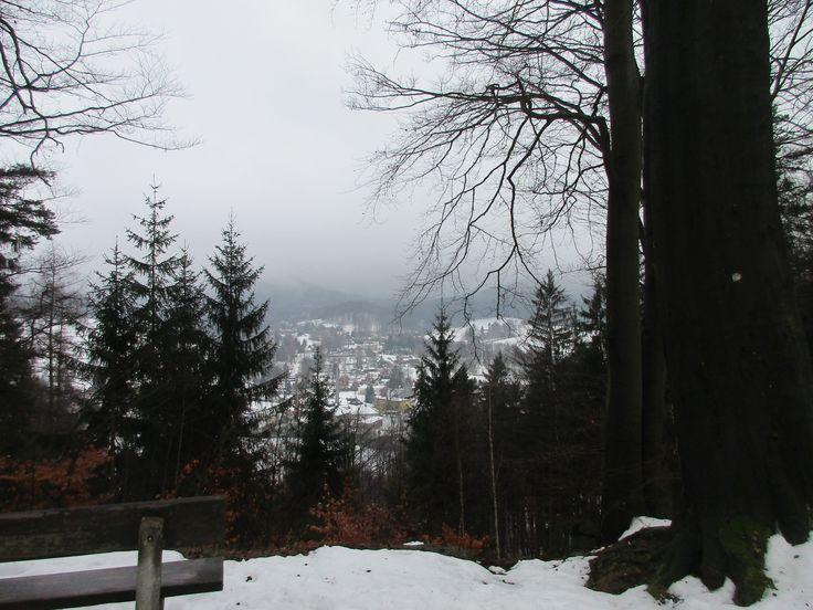 Les a obec Chřibská - severní Čechy