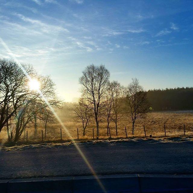 and there you go.. the reason I L.O.V.E spring.....  #visitnorway #visitscandinavia #godmorgennorge #NordicTB #nordicblog #jæren #jærbladet #aftenbladet #norwegiannature #norway #regionstavanger #jærenibilder #travelstoke #igersmood