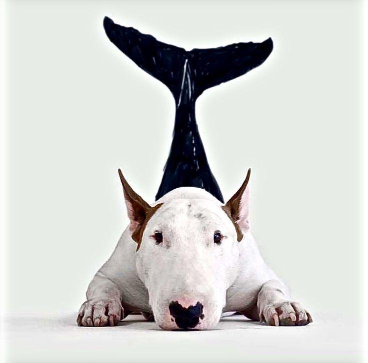 Jimmy The Shark ~ Jimmy Choo & Rafael Mantesso