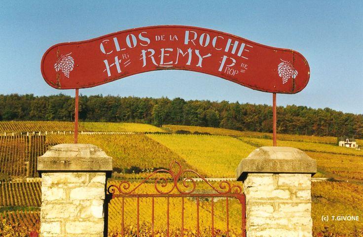 Clos de la Roche  - Morey-Saint-Denis.