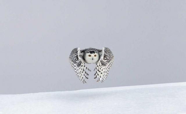 Vincent Munier, naturellement photographe - Lorraine