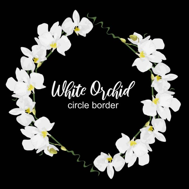 Floral White Orchid Flower Circle Border Frame Circle Orchid Png And Vector With Transparent Background For Free Download Flower Circle White Flower Background White Orchids