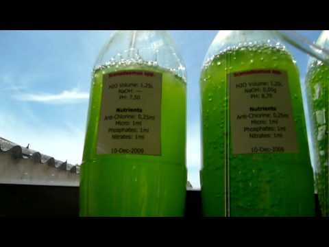 1000 Images About Bio Diesel Recycled Amp Grown On