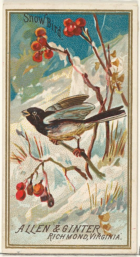 Issued by Allen & Ginter (American). Snow Bird, from the Birds of America series (N4) for Allen & Ginter Cigarettes Brands, 1888. The Metropolitan Museum of Art, New York. The Jefferson R. Burdick Collection, Gift of Jefferson R. Burdick (63.350.201.4.7) #snow