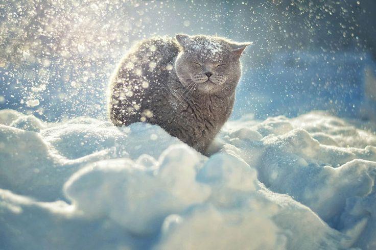 Tak zwierzęta radzą sobie z zimą