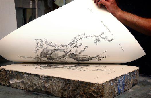 Lithography Process - the final print Photographer:Stuart Humphreys Rights:© Australian Museum http://australianmuseum.net.au/image/Lithography-Process-final-print-1#sthash.fUt7DC3w.dpuf