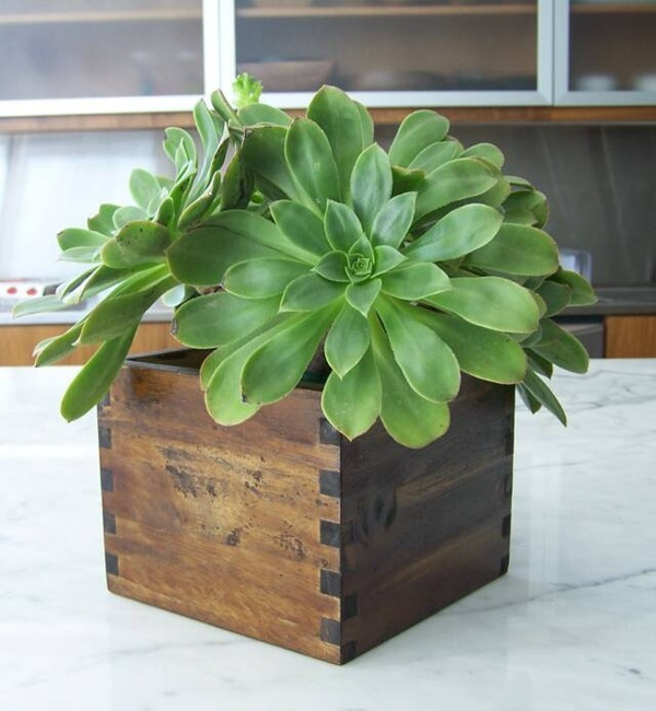 Little Indoor Plant A Green Thumb Pinterest The Box