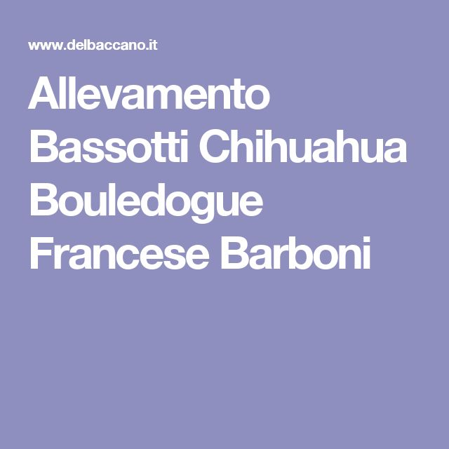 Allevamento Bassotti Chihuahua Bouledogue Francese Barboni