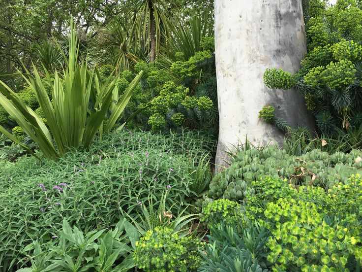Euphorbias, succulents and Gymea lily