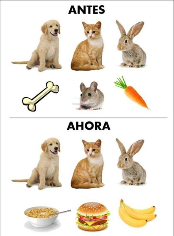 Puro Mmes Memes Divertidos Gracioso Memes Animales