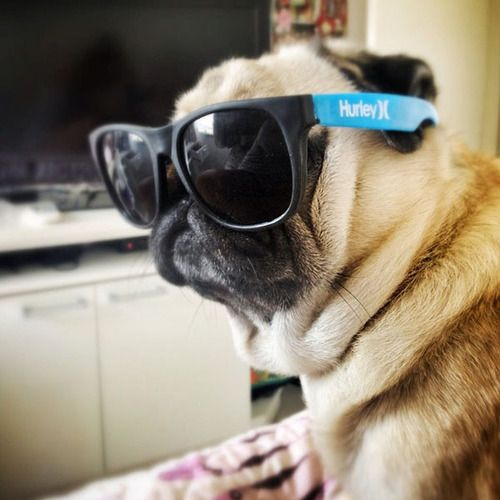 Too cool for you.