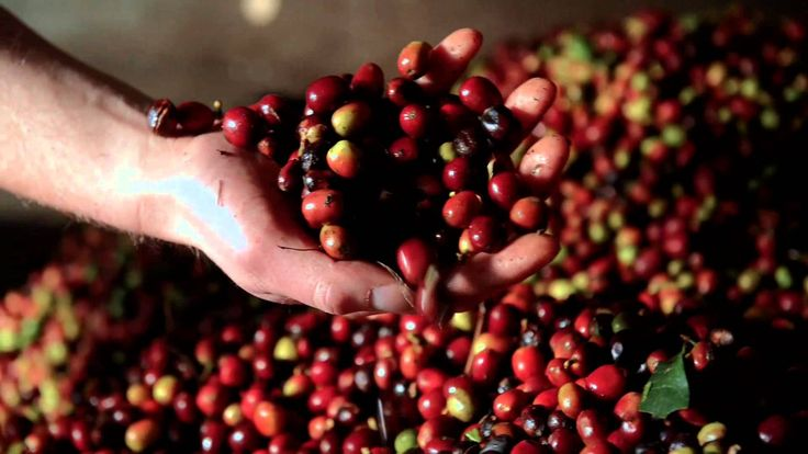 Our story - Aceh coffee Indonesia