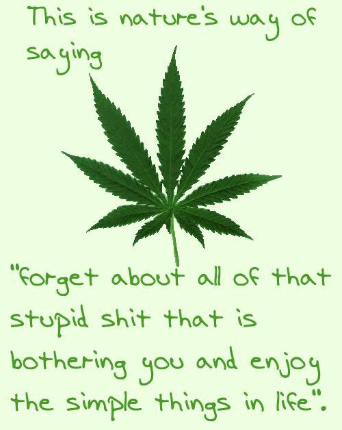 drugs leaves quotes marijuana-#5