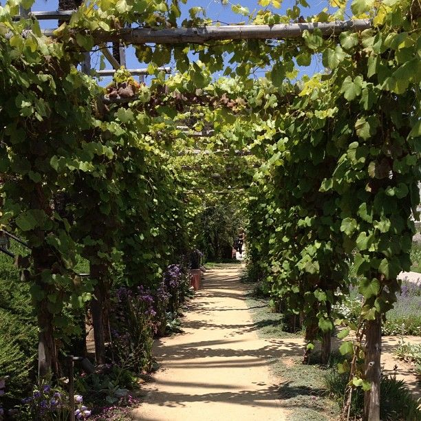 31 Best Images About Grape Vine Everything On Pinterest