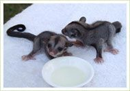 Care of wildlife injured during bushfires | NSW Wildlife Information, Rescue and Education Service WIRES