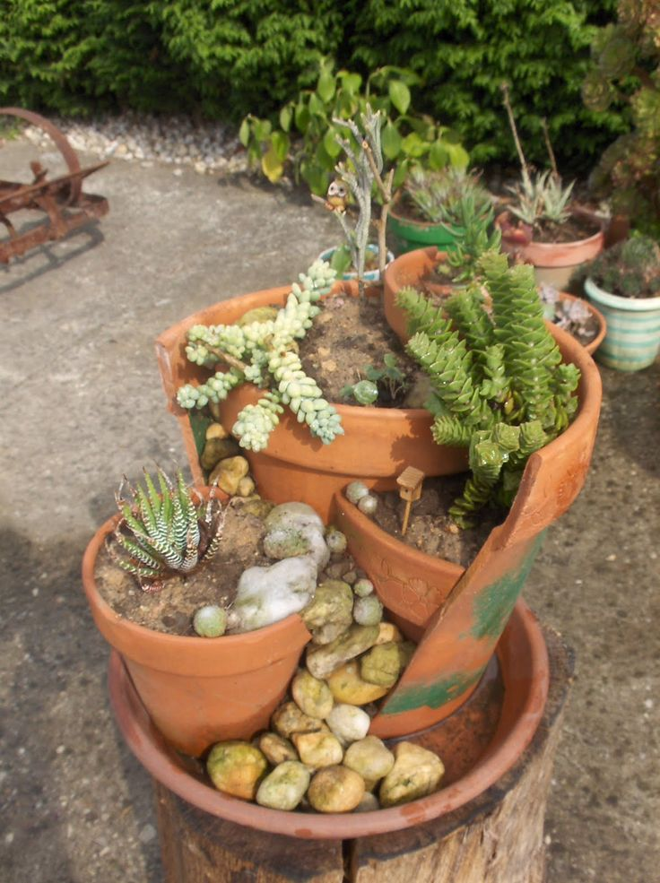 mejores 83 imágenes de cactus en pinterest | cactus, buscando y
